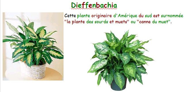 rabebleilaplante.jpg