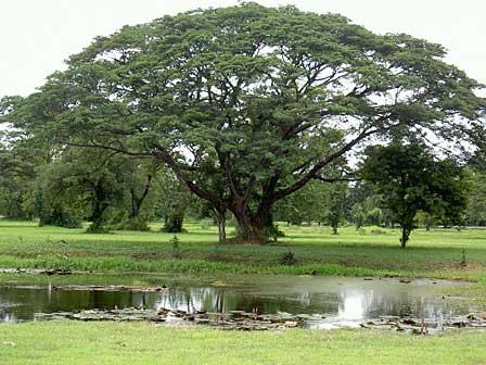 arbre8 Autobio. dans RECITS