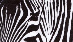 Alice-zebre