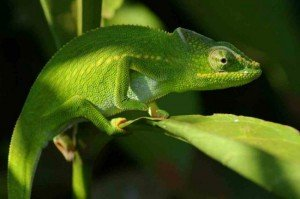 pentax-cameleon-appareil-photo-personnalisable-image-393234-article-ajust_650-300x199