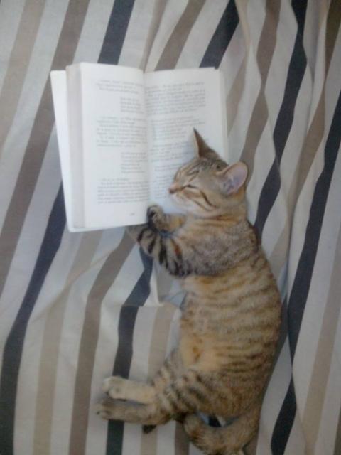 VIVE LA LECTURE dans SE DIVERTIR vive-la-lecture-chat