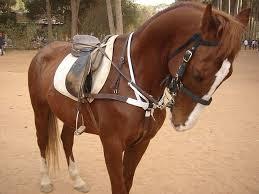 cheval aurelie